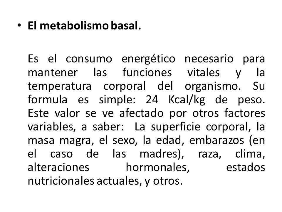 El metabolismo basal.