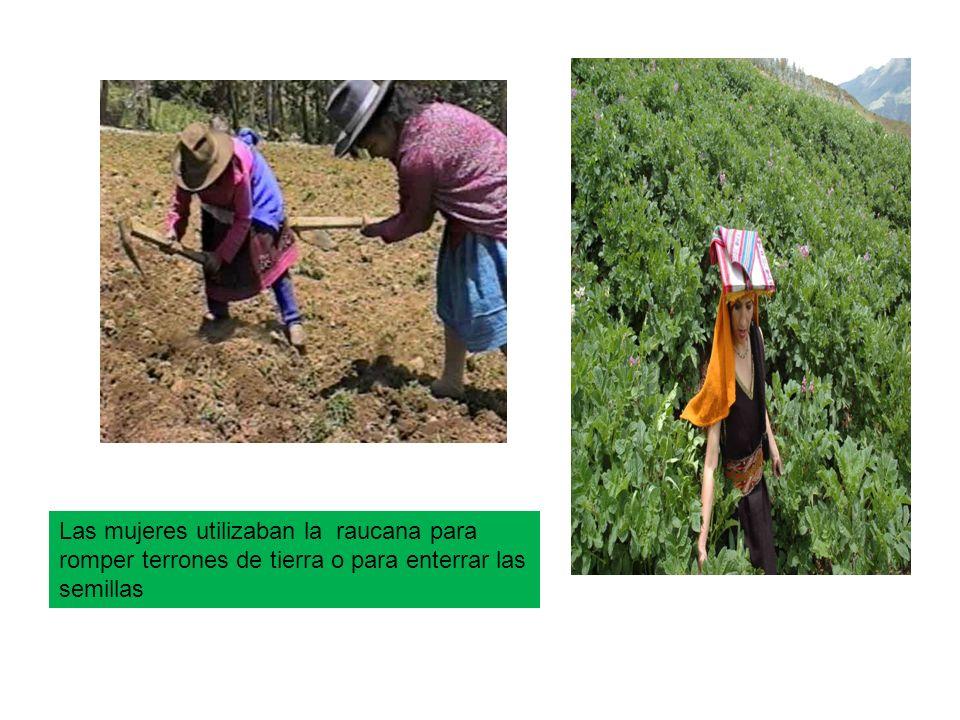 Las mujeres utilizaban la raucana para romper terrones de tierra o para enterrar las semillas
