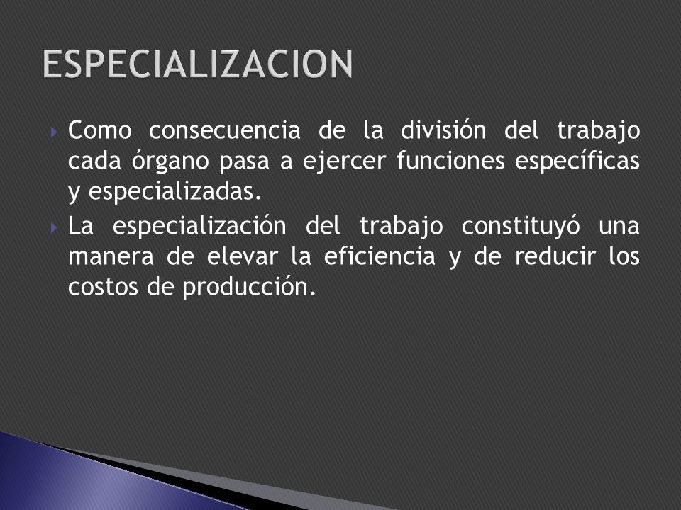 ESPECIALIZACION Como consecuencia de la división del trabajo cada órgano pasa a ejercer funciones específicas y especializadas.