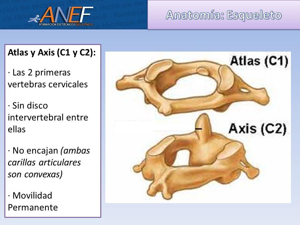 Único Atlas De Anatomía Vértebra Foto - Anatomía de Las Imágenesdel ...