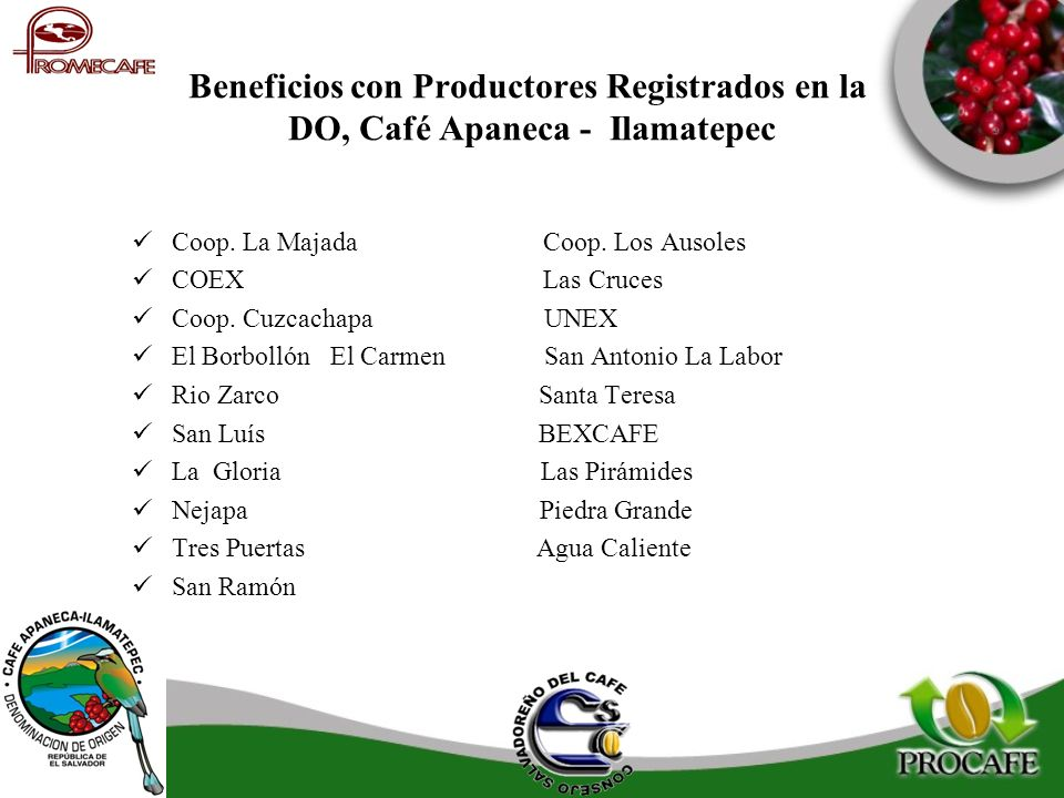 Beneficios con Productores Registrados en la DO, Café Apaneca - Ilamatepec
