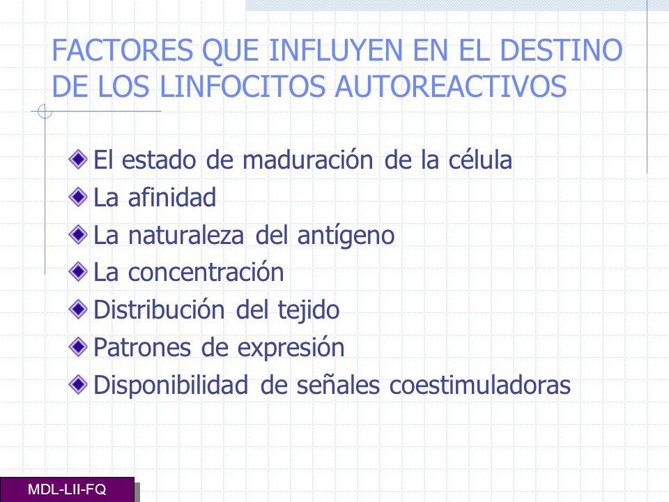 FACTORES QUE INFLUYEN EN EL DESTINO DE LOS LINFOCITOS AUTOREACTIVOS