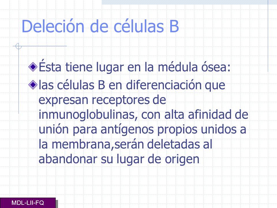 Deleción de células B Ésta tiene lugar en la médula ósea: