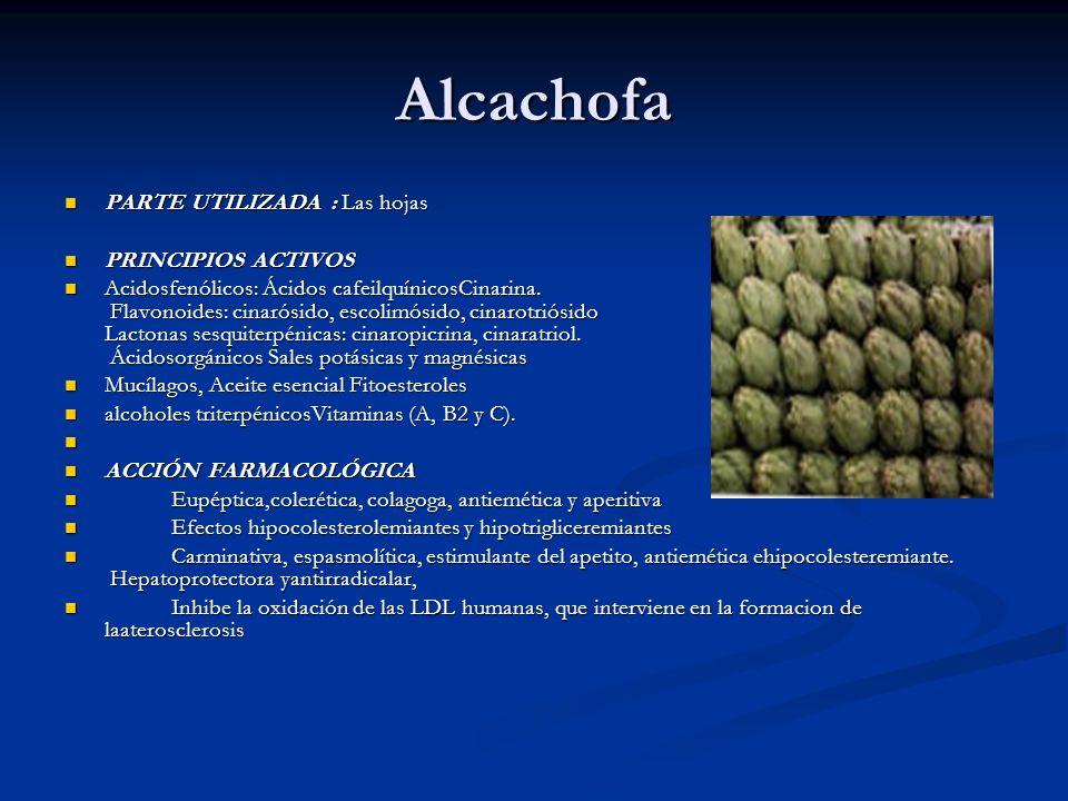 Alcachofa PARTE UTILIZADA : Las hojas PRINCIPIOS ACTIVOS
