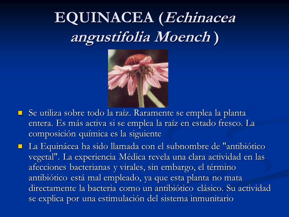 EQUINACEA (Echinacea angustifolia Moench )