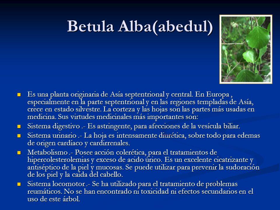 Betula Alba(abedul) Hábitat.