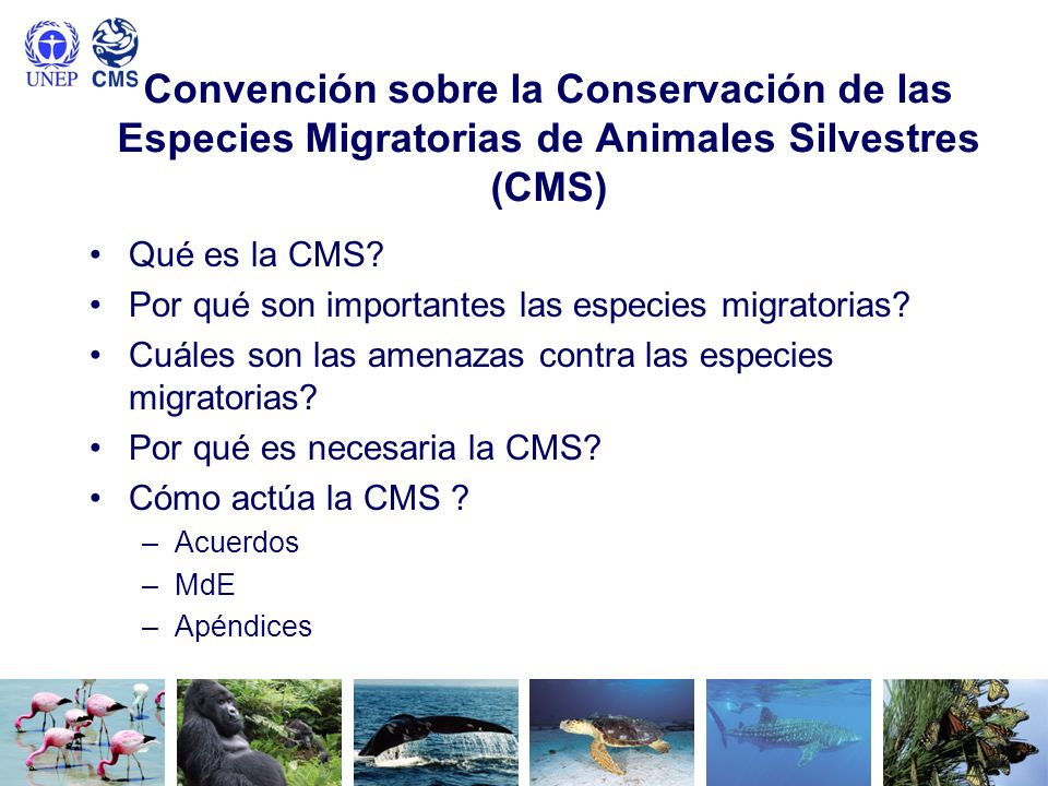 Convención sobre la Conservación de las Especies Migratorias de Animales Silvestres (CMS)