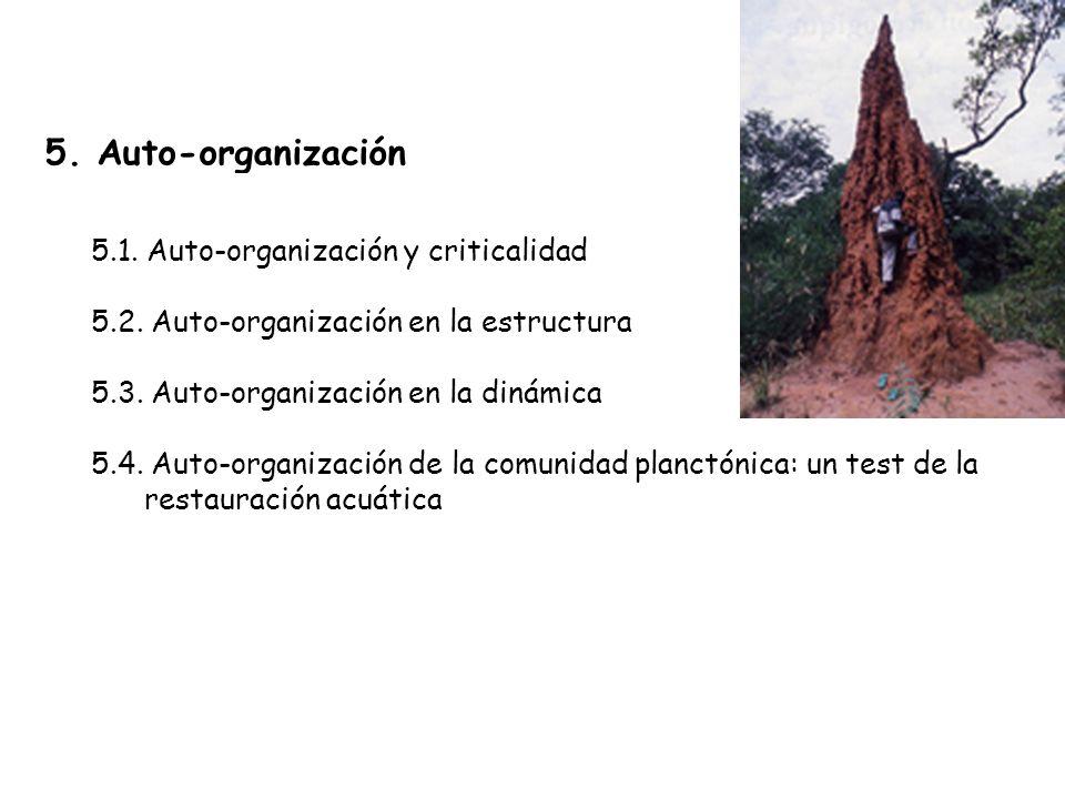 5. Auto-organización 5.1. Auto-organización y criticalidad