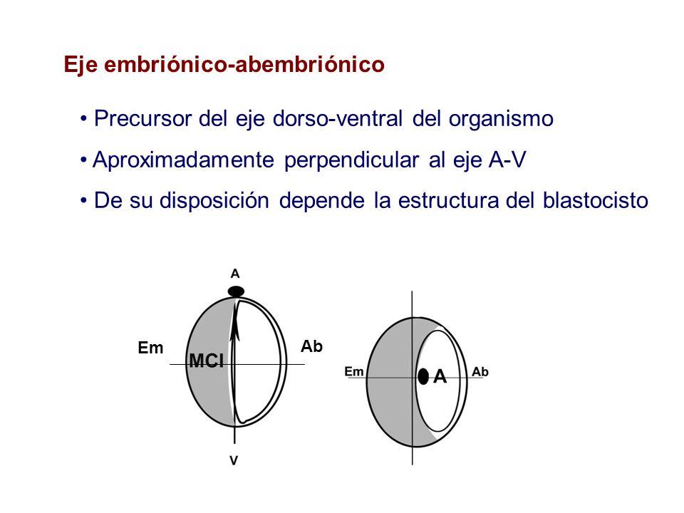 Eje embriónico-abembriónico