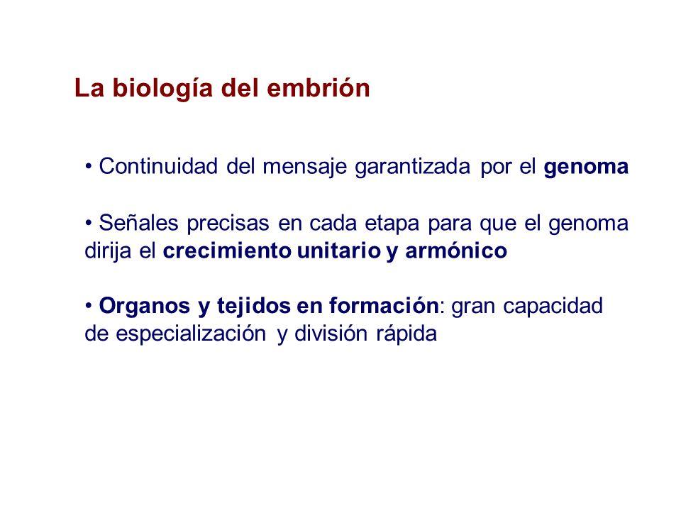 La biología del embrión