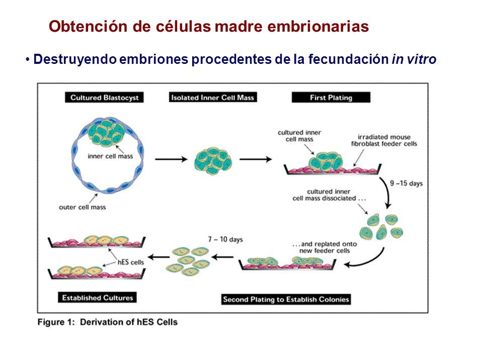 Obtención de células madre embrionarias