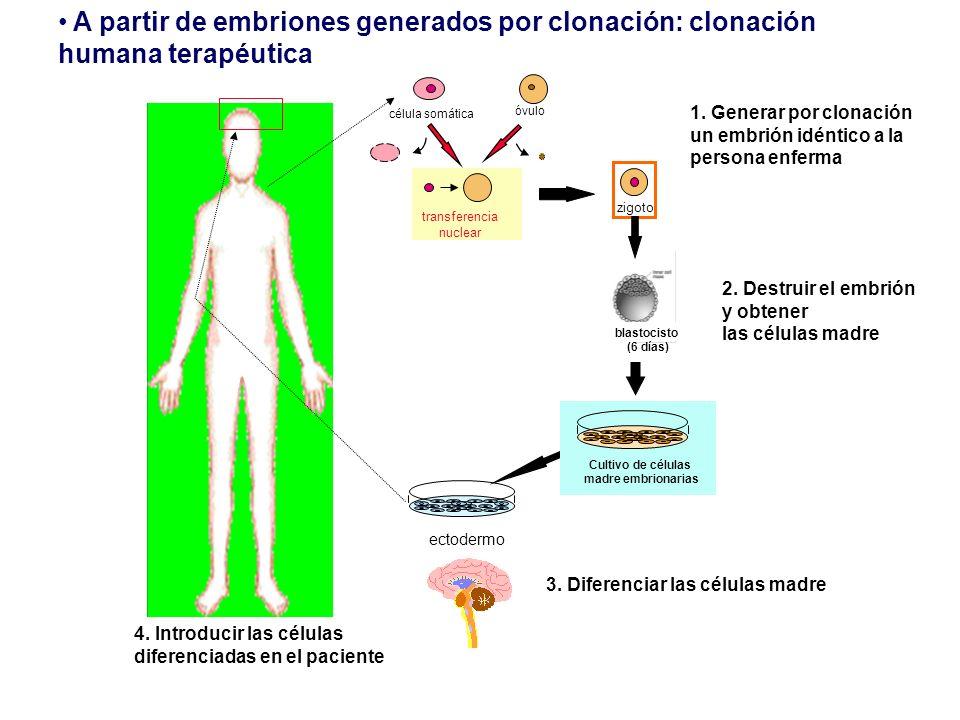 A partir de embriones generados por clonación: clonación humana terapéutica