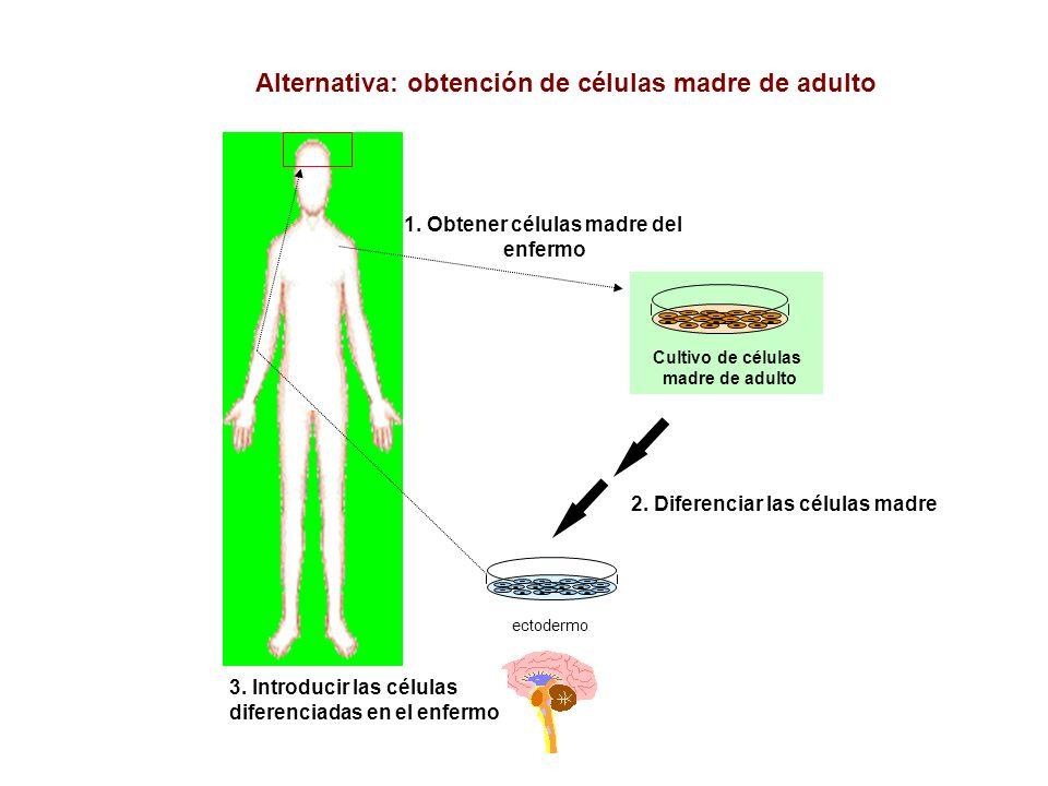 1. Obtener células madre del