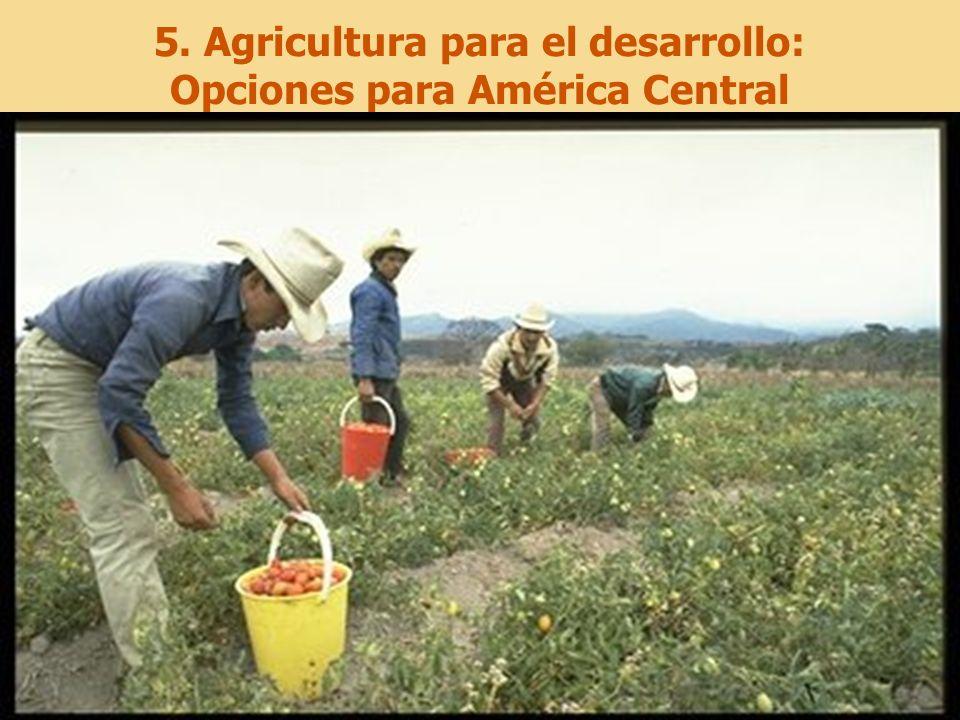 5. Agricultura para el desarrollo: Opciones para América Central