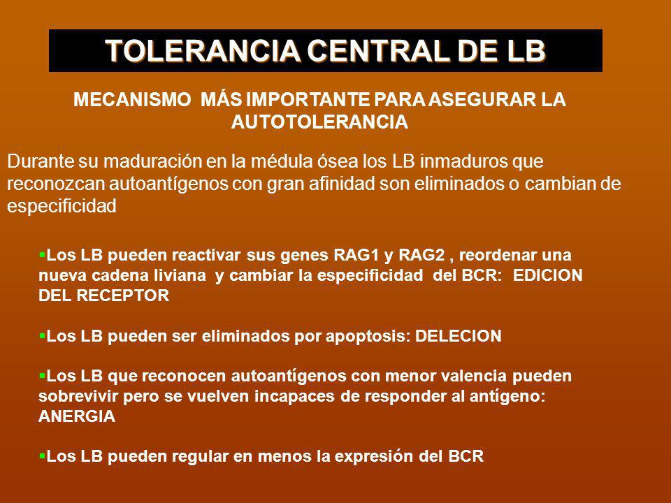 TOLERANCIA CENTRAL DE LB