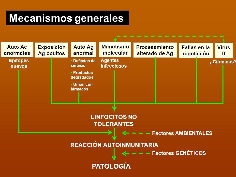 Mecanismos generales PATOLOGÍA LINFOCITOS NO TOLERANTES