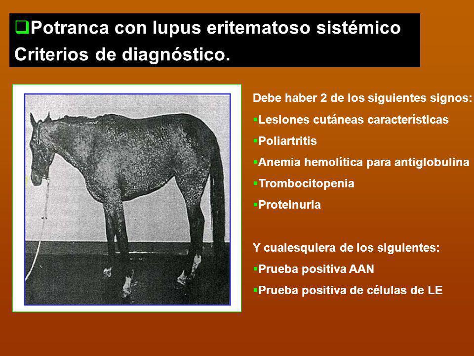 Potranca con lupus eritematoso sistémico Criterios de diagnóstico.