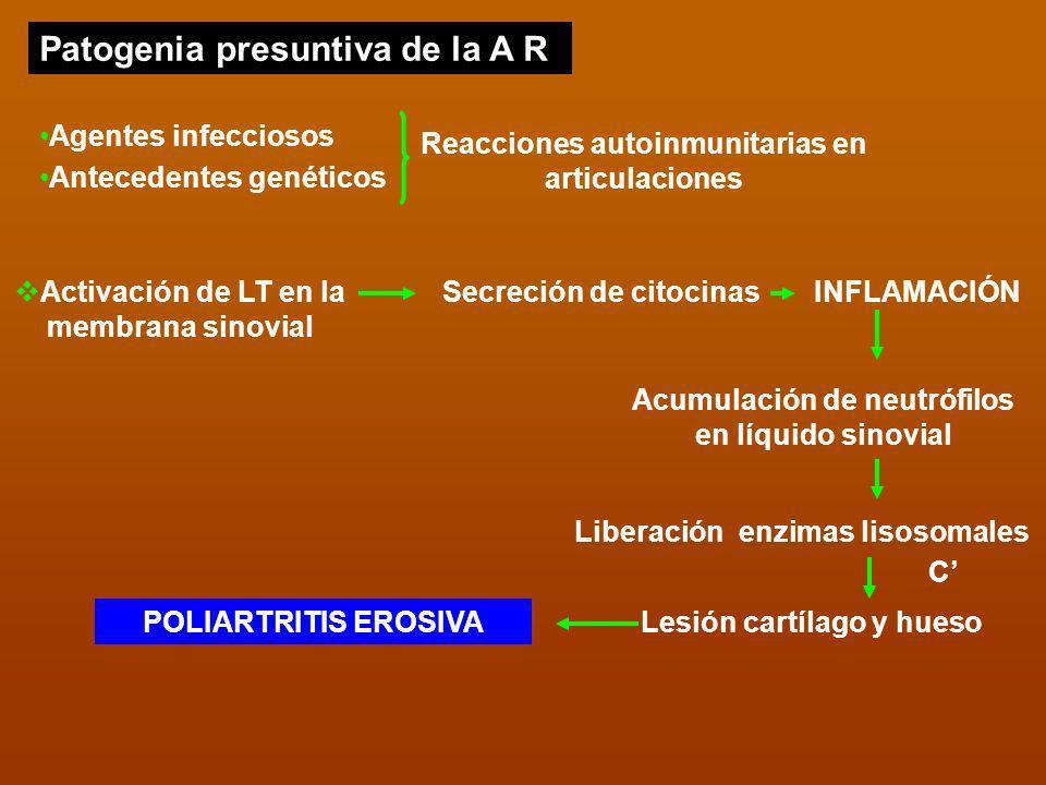 Patogenia presuntiva de la A R