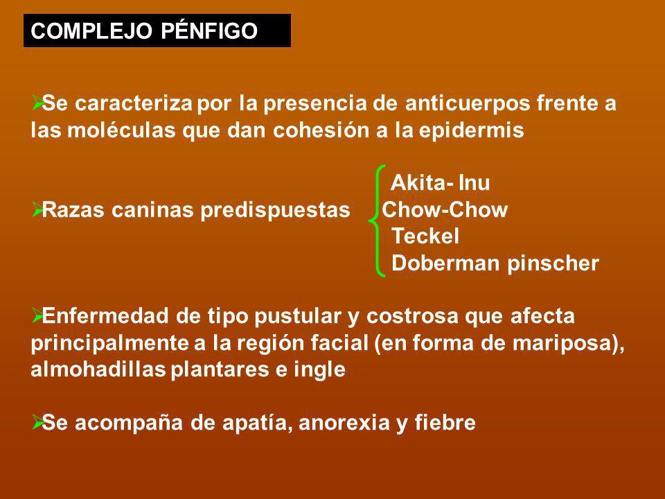 COMPLEJO PÉNFIGO Se caracteriza por la presencia de anticuerpos frente a las moléculas que dan cohesión a la epidermis.