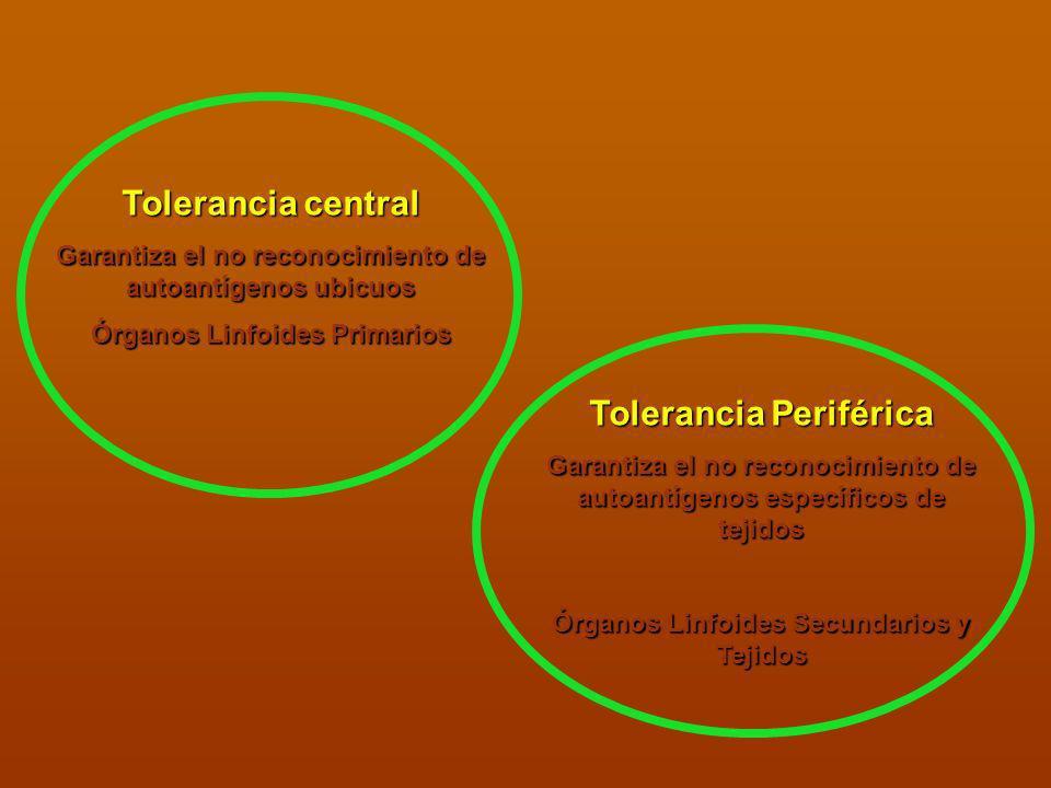 Tolerancia central Tolerancia Periférica