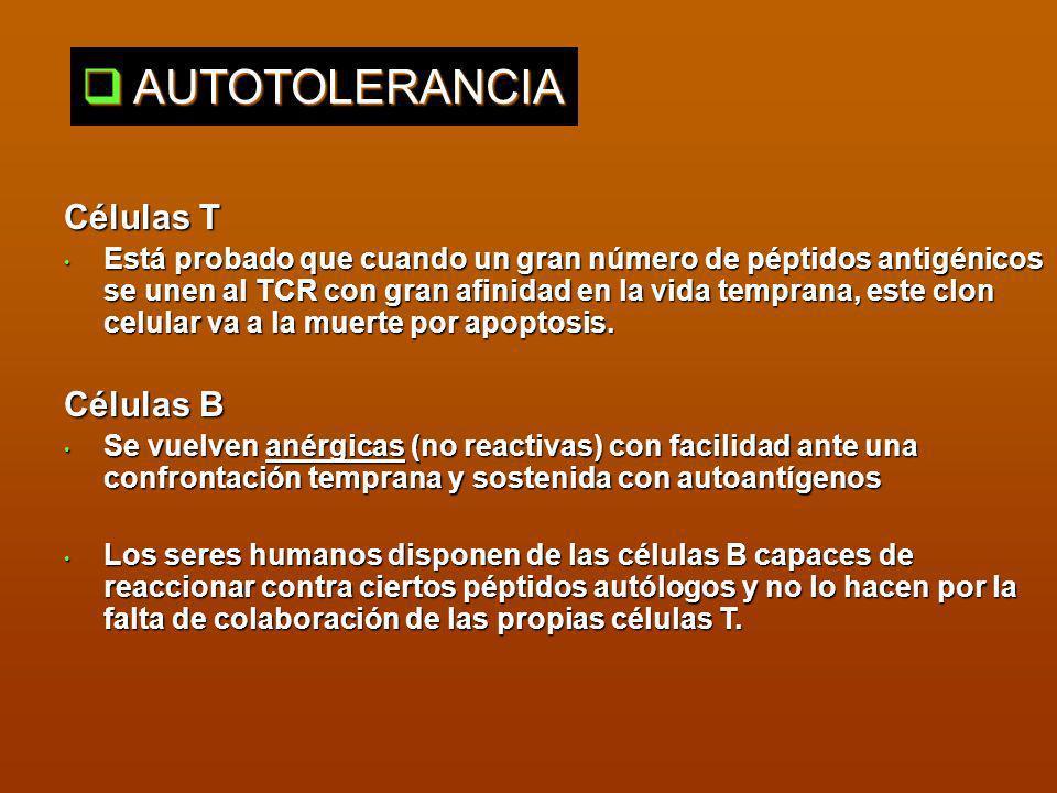 AUTOTOLERANCIA Células T Células B