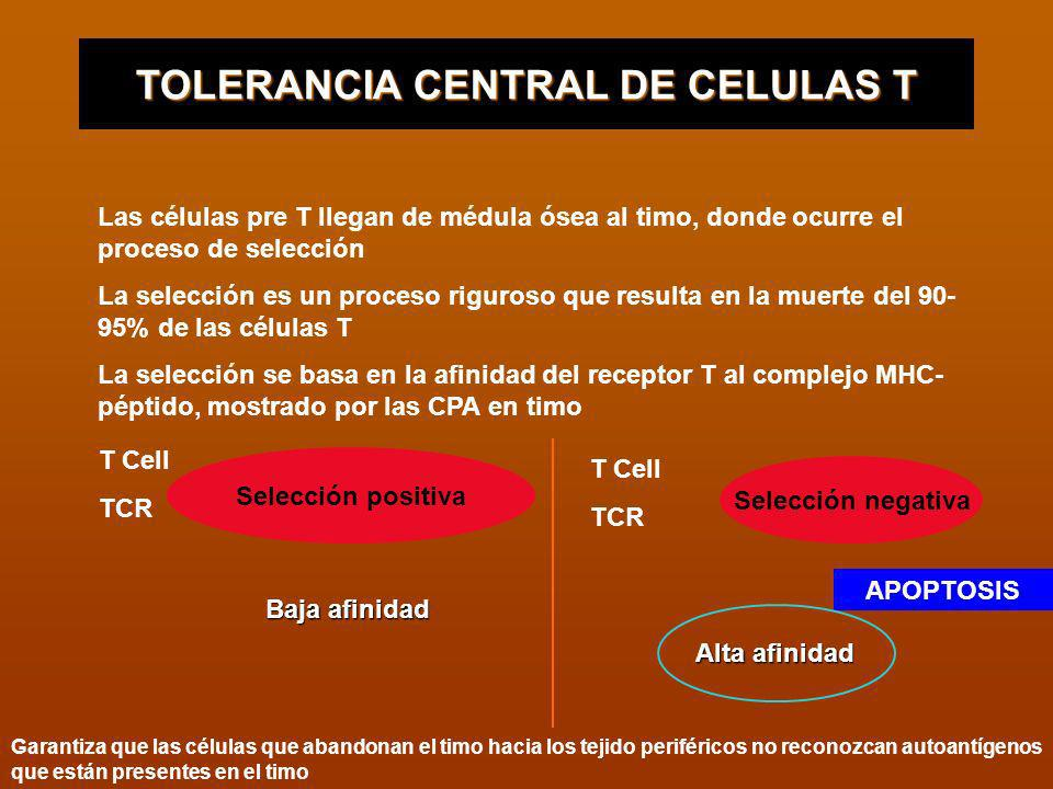 TOLERANCIA CENTRAL DE CELULAS T