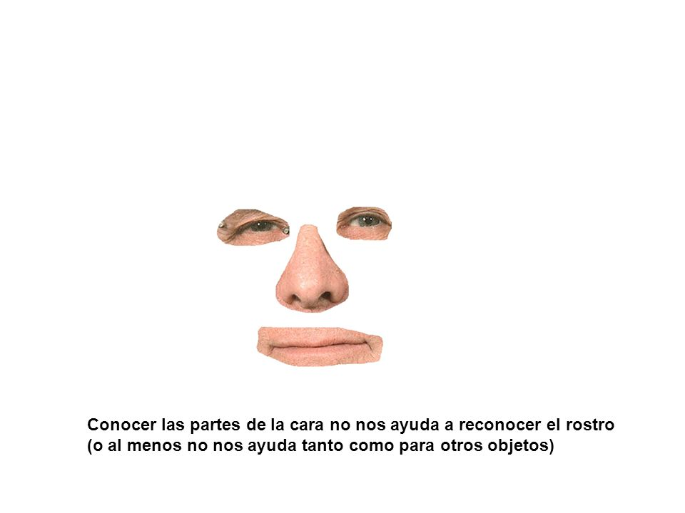 Conocer las partes de la cara no nos ayuda a reconocer el rostro