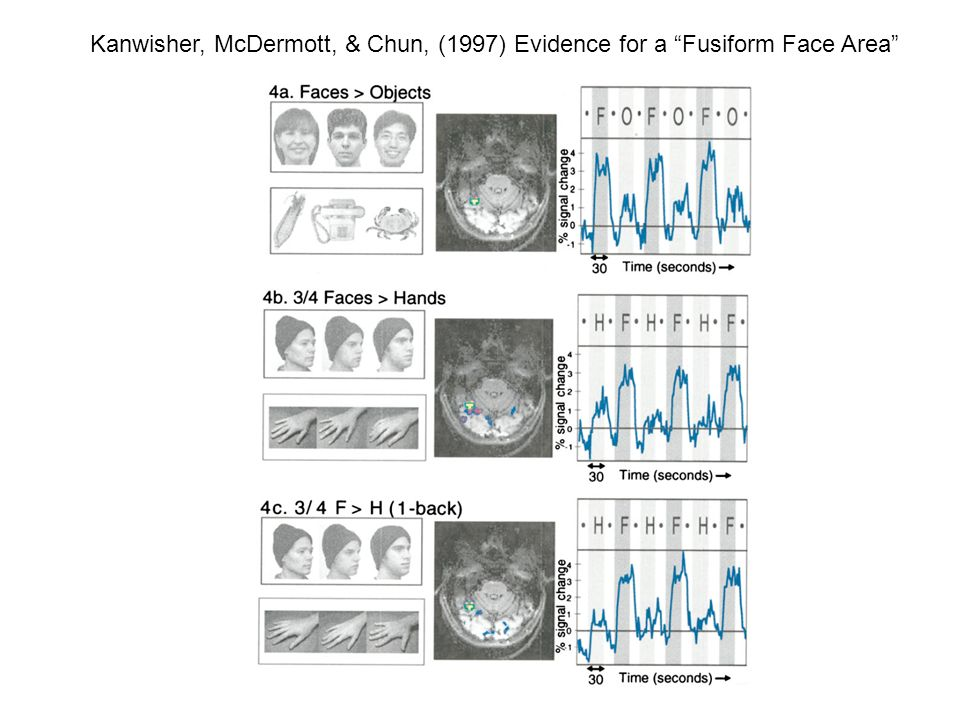 Kanwisher, McDermott, & Chun, (1997) Evidence for a Fusiform Face Area