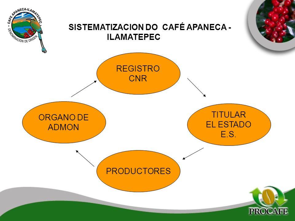 SISTEMATIZACION DO CAFÉ APANECA - ILAMATEPEC