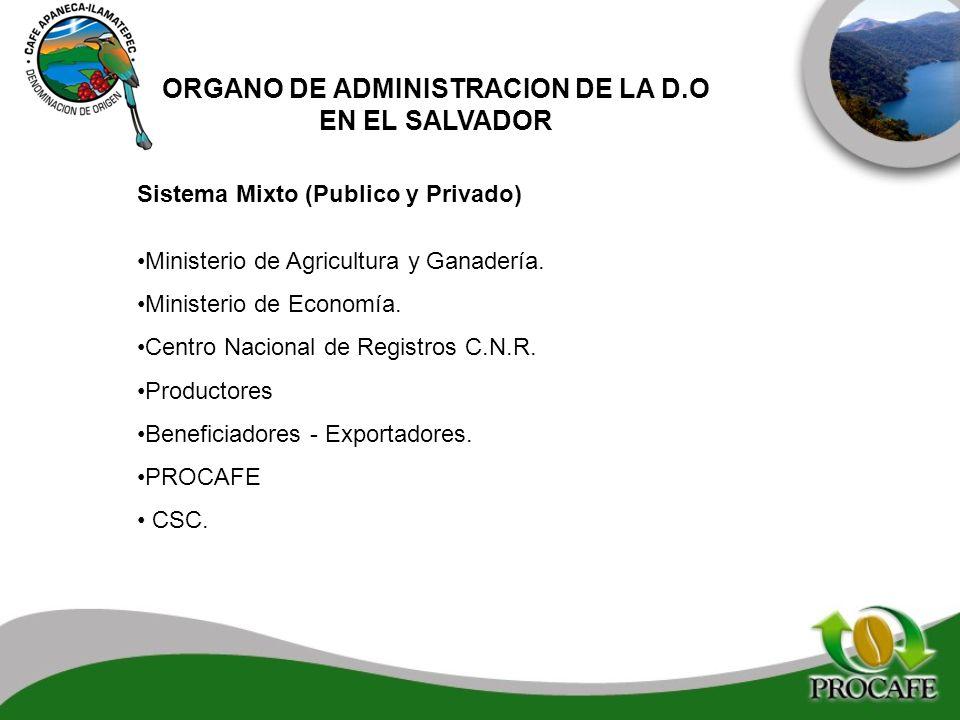 ORGANO DE ADMINISTRACION DE LA D.O
