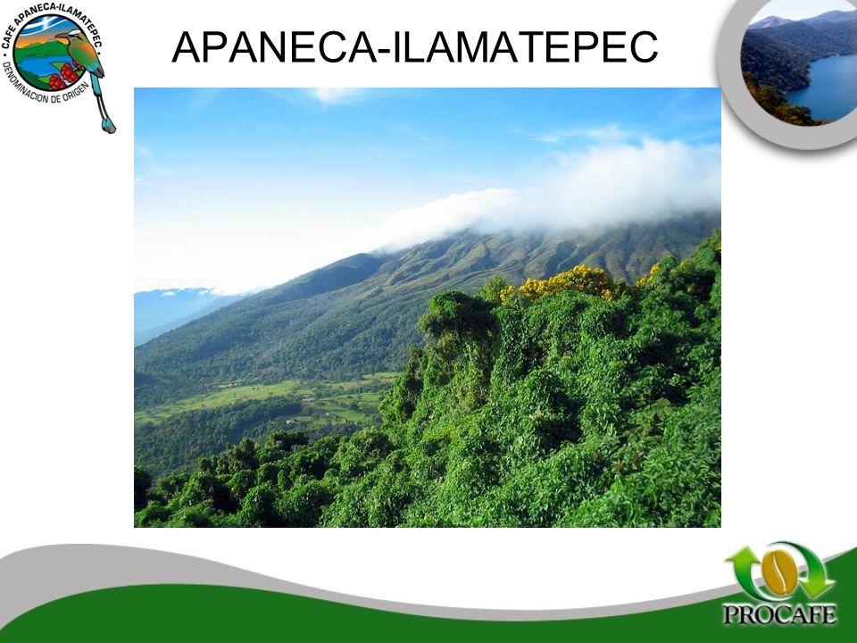 APANECA-ILAMATEPEC 29