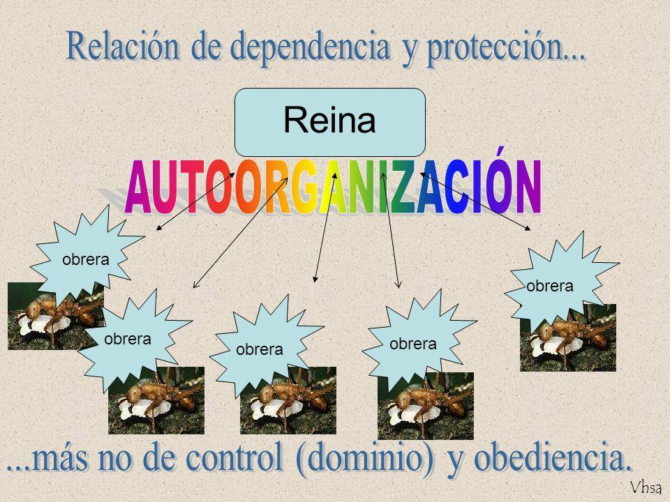 Reina Relación de dependencia y protección... AUTOORGANIZACIÓN