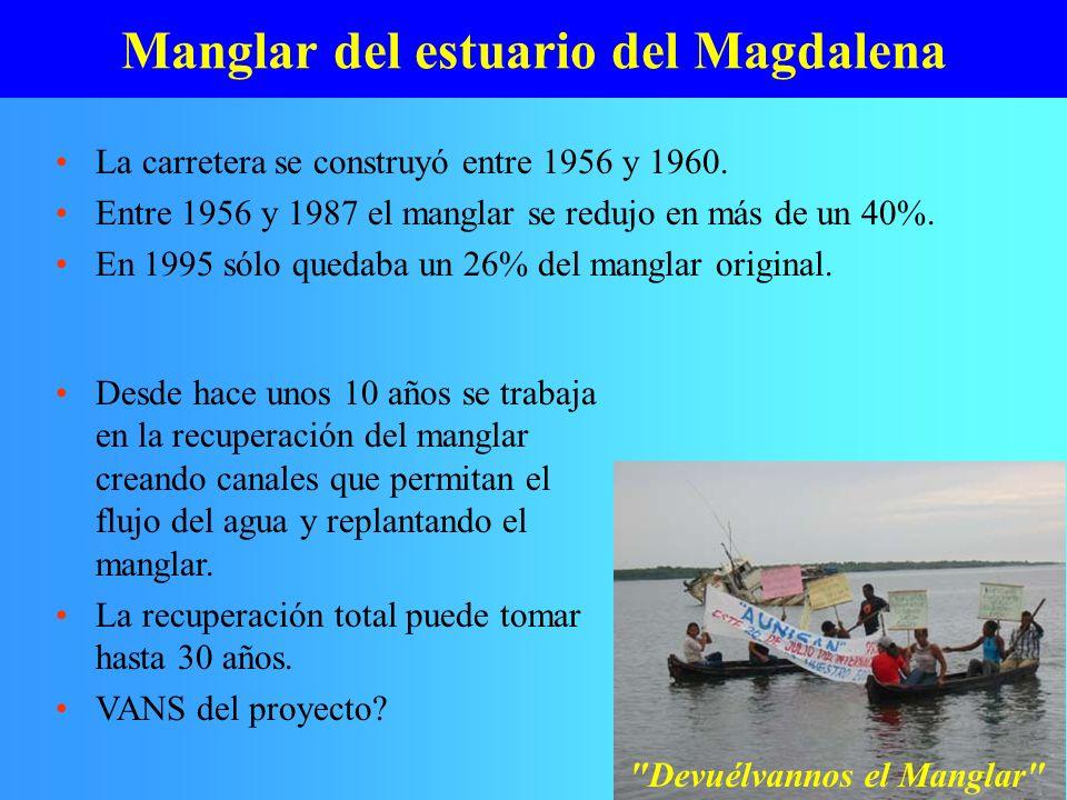 Manglar del estuario del Magdalena