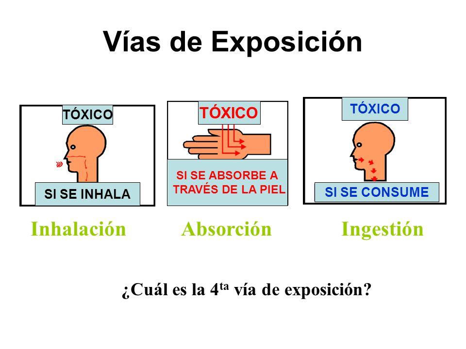 ¿Cuál es la 4ta vía de exposición