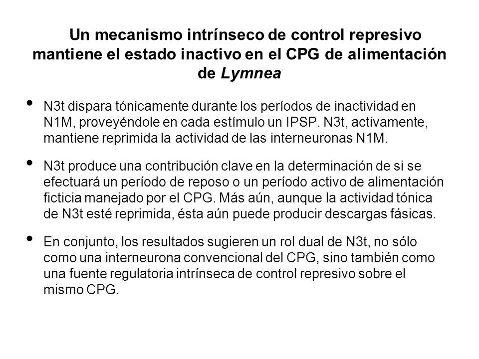 Un mecanismo intrínseco de control represivo mantiene el estado inactivo en el CPG de alimentación de Lymnea