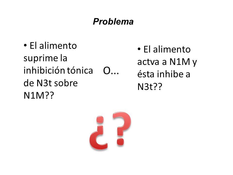 O... El alimento suprime la inhibición tónica de N3t sobre N1M