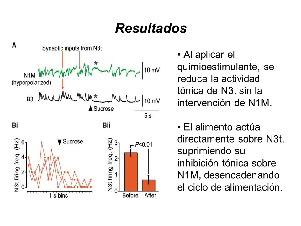 Resultados Al aplicar el quimioestimulante, se reduce la actividad tónica de N3t sin la intervención de N1M.