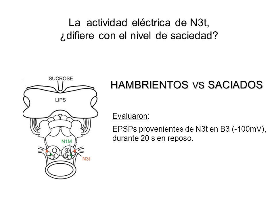 La actividad eléctrica de N3t, ¿difiere con el nivel de saciedad