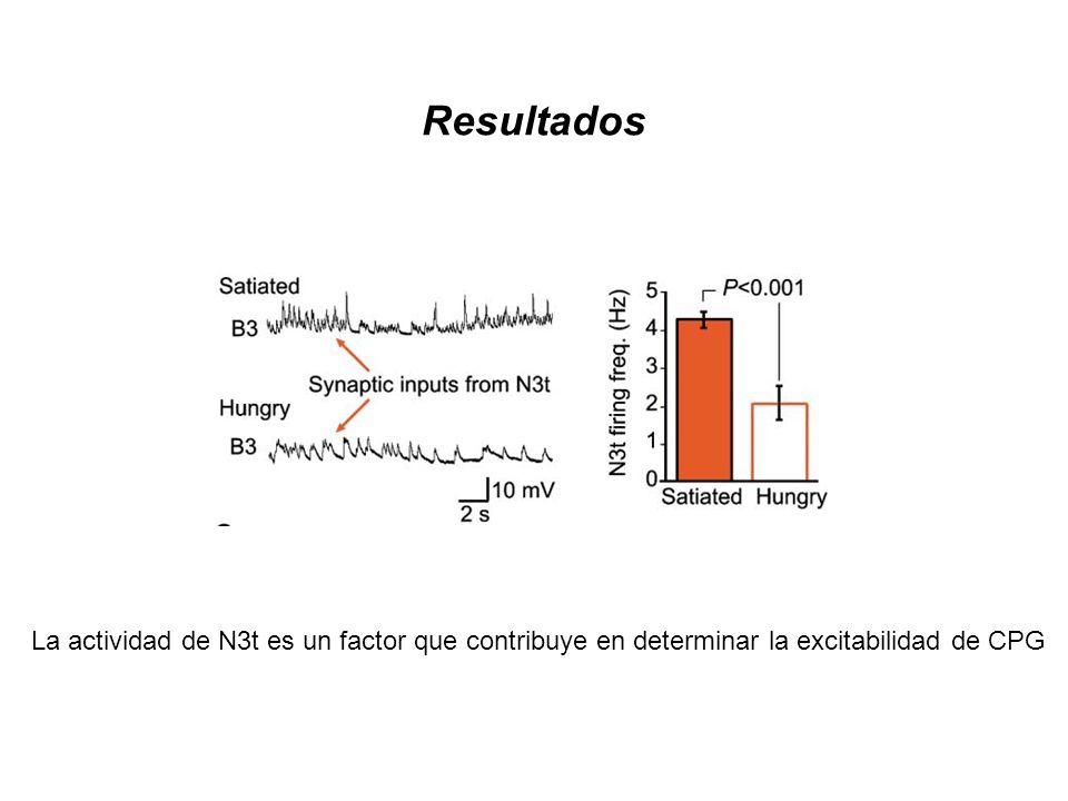 Resultados La actividad de N3t es un factor que contribuye en determinar la excitabilidad de CPG