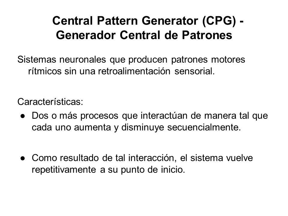 Central Pattern Generator (CPG) - Generador Central de Patrones