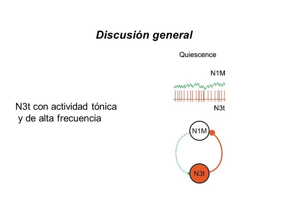 Discusión general N3t con actividad tónica y de alta frecuencia