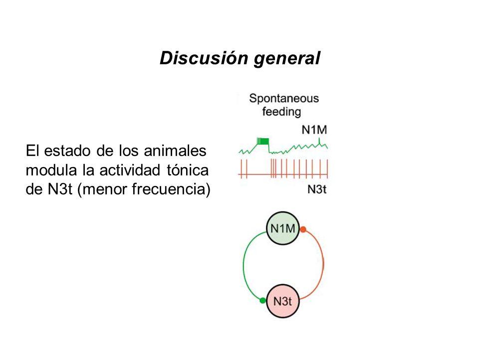 Discusión general El estado de los animales modula la actividad tónica