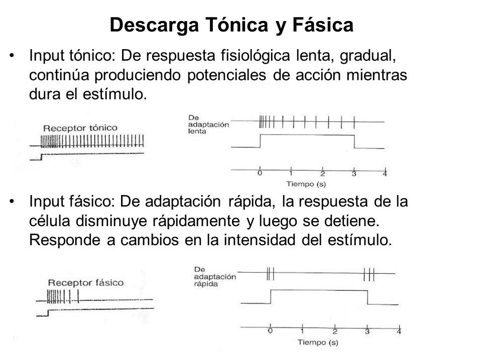 Descarga Tónica y Fásica