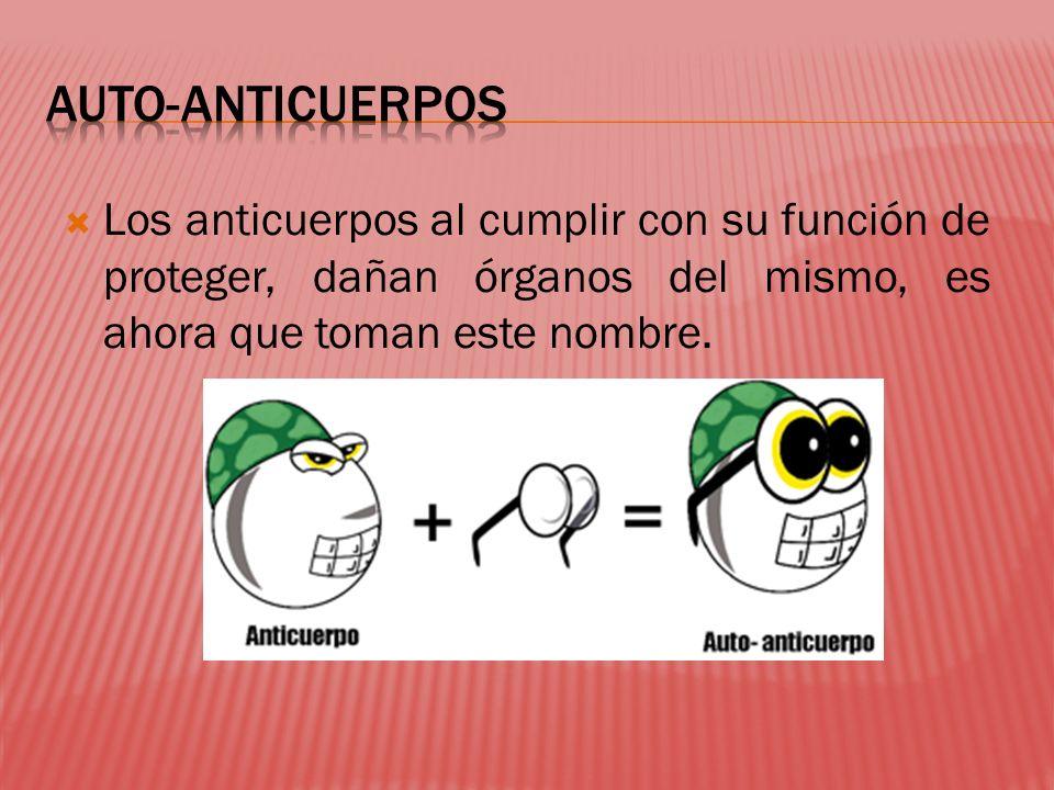 AUTO-ANTICUERPOS Los anticuerpos al cumplir con su función de proteger, dañan órganos del mismo, es ahora que toman este nombre.