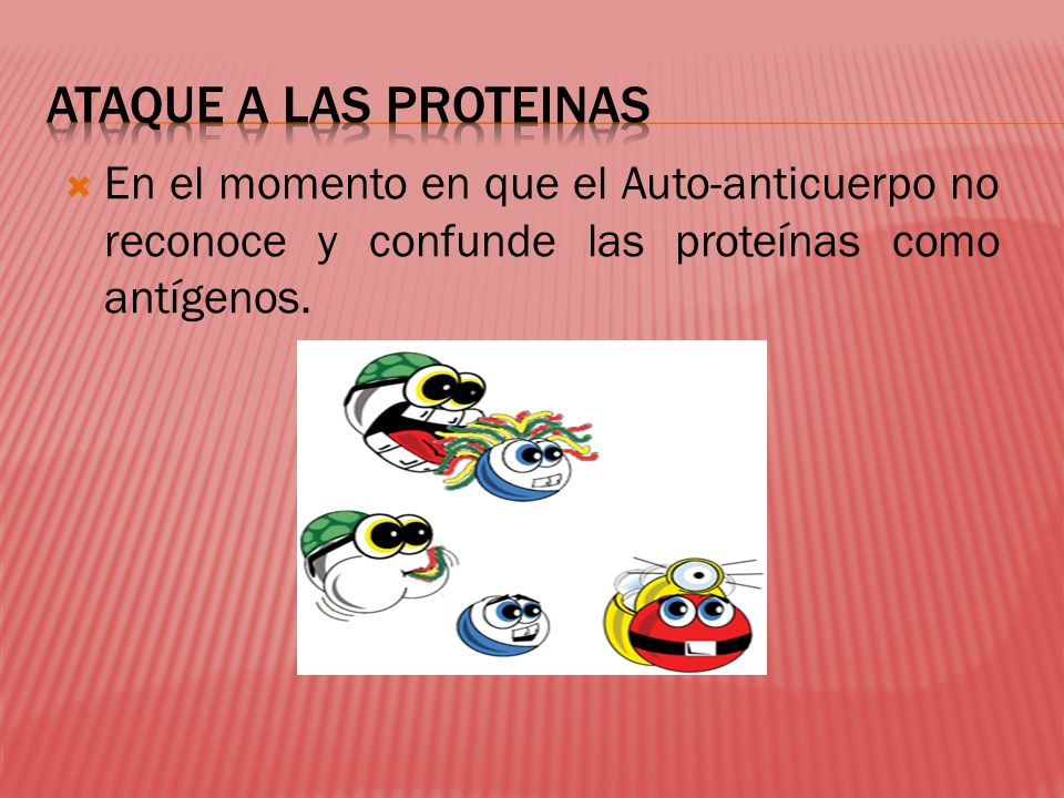 ATAQUE A LAS PROTEINAS En el momento en que el Auto-anticuerpo no reconoce y confunde las proteínas como antígenos.