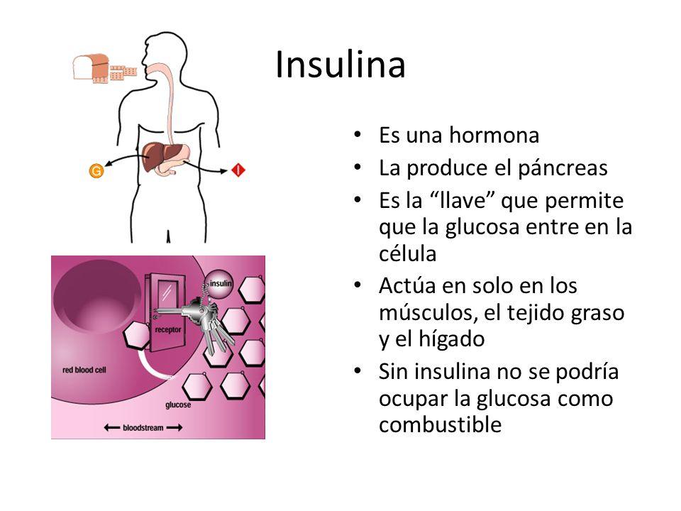 Insulina Es una hormona La produce el páncreas