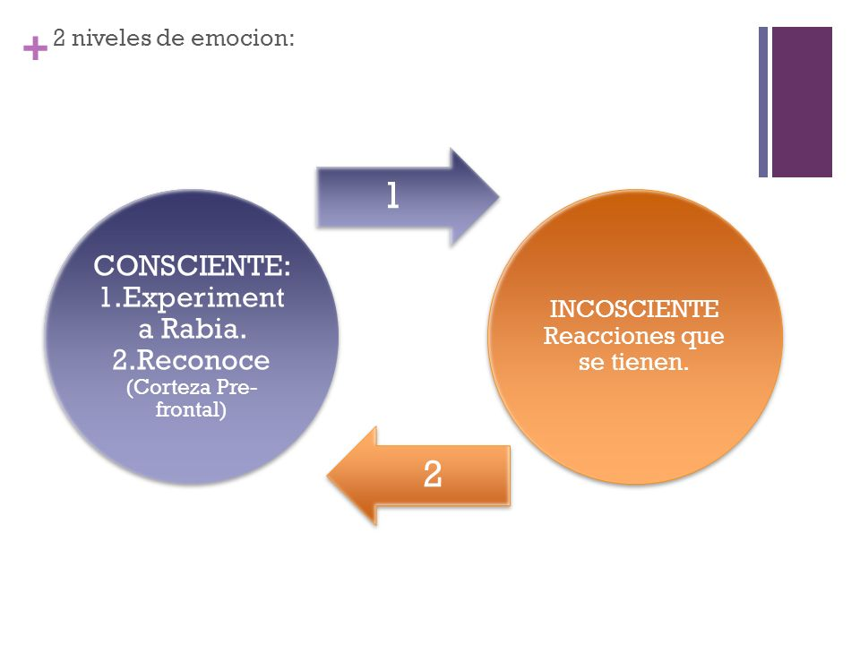 CONSCIENTE: 1.Experimenta Rabia. 2.Reconoce (Corteza Pre-frontal)