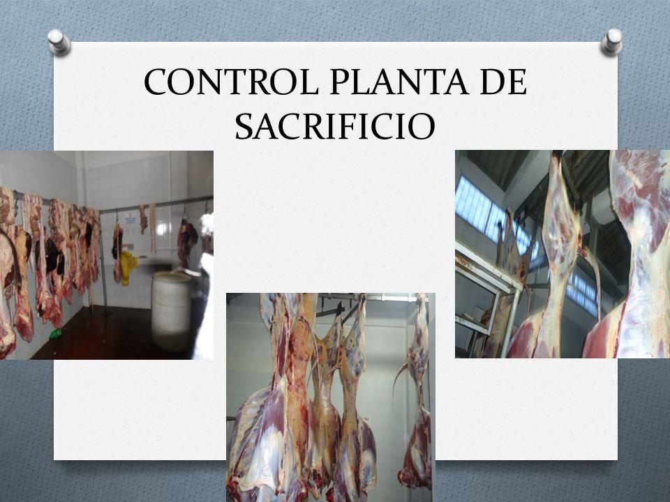 CONTROL PLANTA DE SACRIFICIO