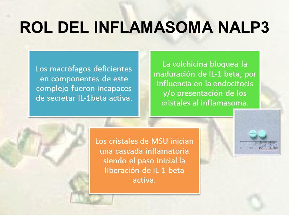 ROL DEL INFLAMASOMA NALP3