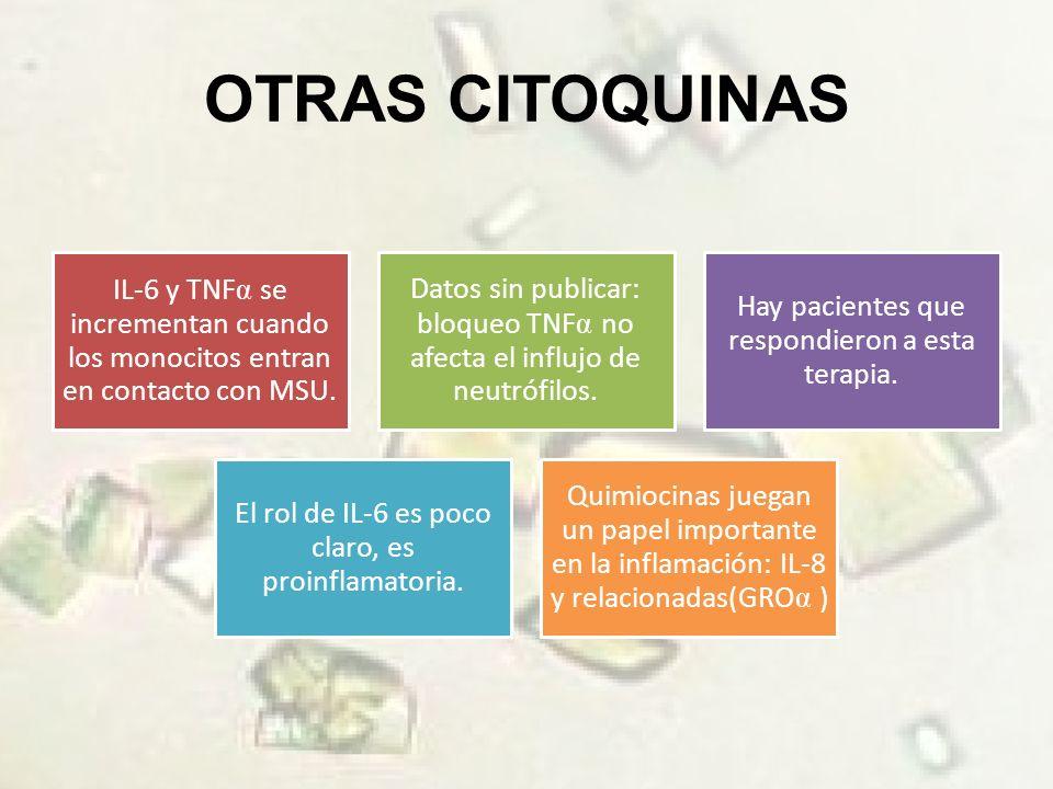 OTRAS CITOQUINAS IL-6 y TNF se incrementan cuando los monocitos entran en contacto con MSU.